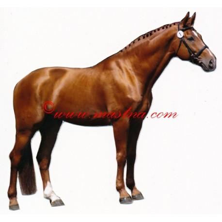 Samolepka teplokrevník, kůň , koně