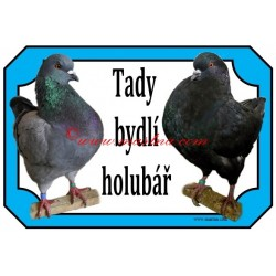 Cedulka holub king