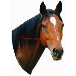 Samolepka anglický plnokrevník, kůň , koně