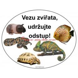 Magnetická fólie morče,chameleon,had, želva,ryba
