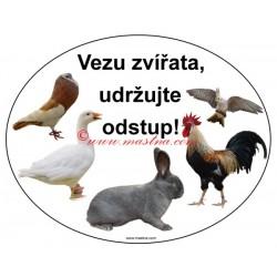 Magnetická fólie králík, holub, drůbež, husa, papoušek, korela