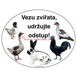 Magnetická fólie králík, holub, drůbež, husa, kachna, kohout