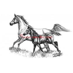 Samolepka arab, kůň, koně