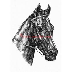 Samolepka anglický plnokrevník Quadra, kůň, koně