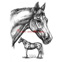 Samolepka anglický plnokrevník Korok, kůň, koně