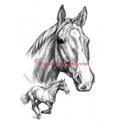 Samolepka Sagar, anglický plnokrevník, kůň, koně