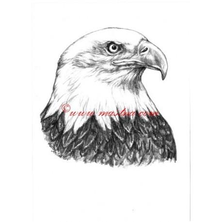 Obraz orel bělohlavý, tužka - tisk