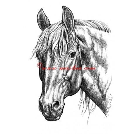 Samolepka teplokrevník, kůň, koně