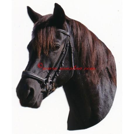 Samolepka huculský kůň, koně