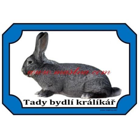 Cedulka králík činčila velká