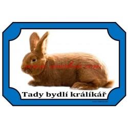 Cedulka králík novozélandský červený