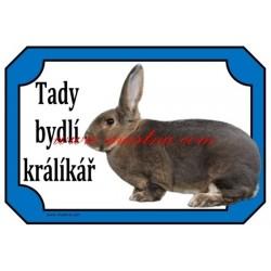 Cedulka králík rex slovenský sivomodrý