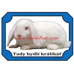 Cedulka králík zakrslý beránek bílý