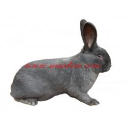 Samolepka králík moravský modrý