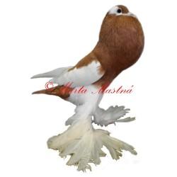 Samolepka holub český voláč