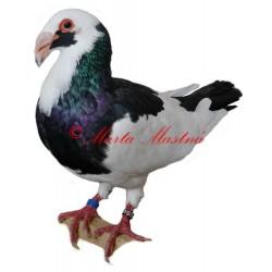 Samolepka holub norimberská bagdeta