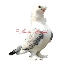 Samolepka holub orientální racek, sovka