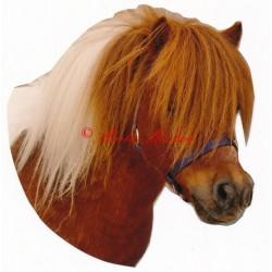 Samolepka shetlandský pony, kůň, koně