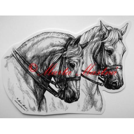 Samolepka kůň kladrubský, lipicán