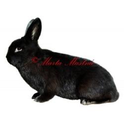 Samolepka králík aljaška