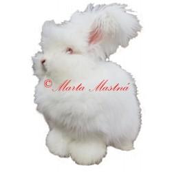 Samolepka králík angora