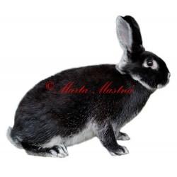 Samolepka králík bílopesíkatý