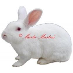 Samolepka králík český albín