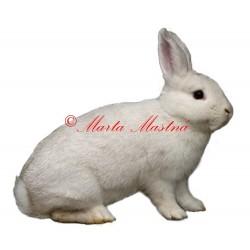 Samolepka králík český černopesíkatý