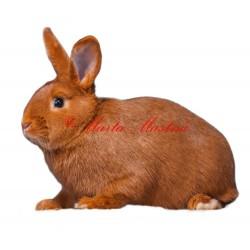 Samolepka králík český červený