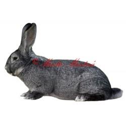 Samolepka králík činčila velká