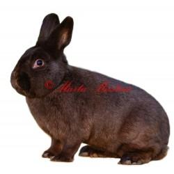 Samolepka králík havana
