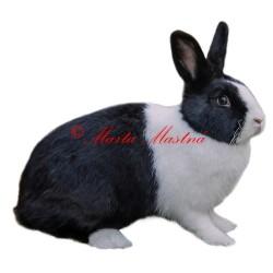 Samolepka králík holandský