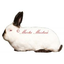 Samolepka králík kalifornský