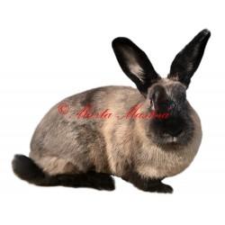 Samolepka králík kuní