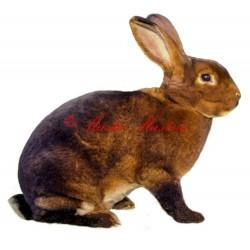 Samolepka králík kastorex, castorex