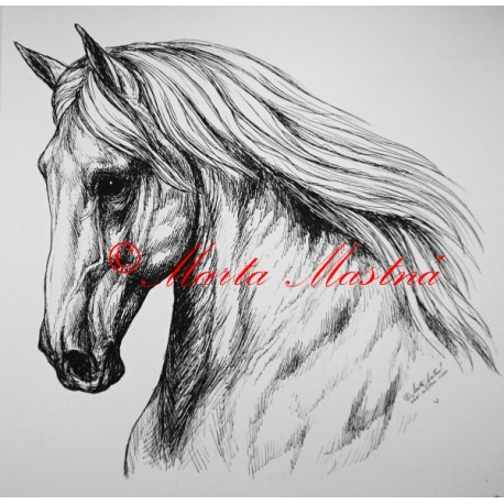 Samolepka kůň andaluzan, lusitano