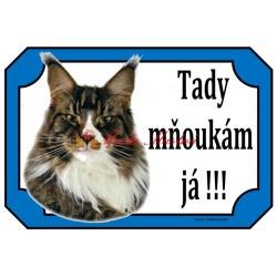 Cedulka kočka mainská mývalí, maine coon