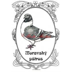 Cedulka holub moravský pštros