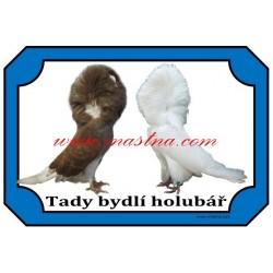 Cedulka holub parukář
