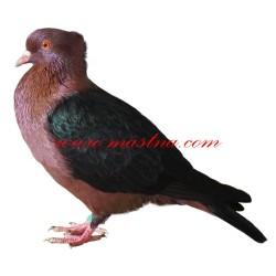 Samolepka holub hýl