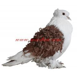 Samolepka holub kudrnáč