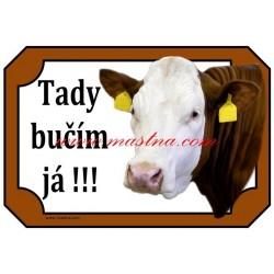 Tabulka kráva, český strakatý, červenostrakatý skot