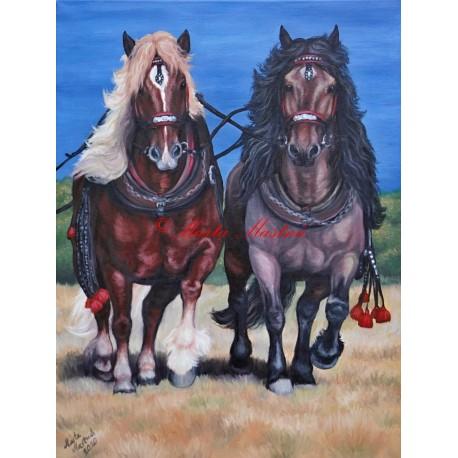 Obraz koně, chladnokrevníci, norik Nikon a belgik Kobi, hřebčinec Písek