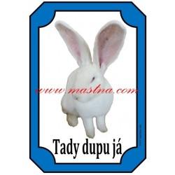 Cedulka králík belgický obr albín