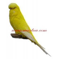 Samolepka andulka, papoušek vlnkovaný lutino