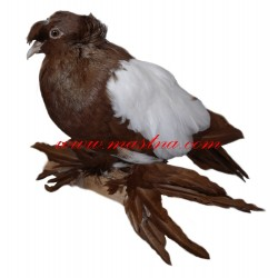 Samolepka holub český bublák červený běloštítý