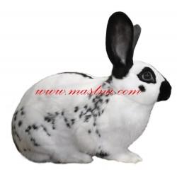 Samolepka králík anglický strakáč