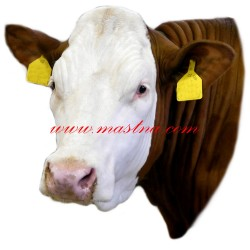 Samolepka skot červenostrakatý, kráva česká strakatá