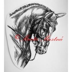 Samolepka kůň teplokrevník, drezura, koně