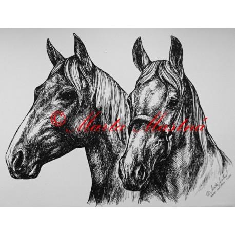 Samolepka koně teplokrevníci